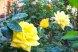 Пансионат, Курортная улица, 4/4 на 6 номеров - Фотография 33