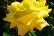 Пансионат, Курортная улица, 4/4 на 6 номеров - Фотография 19