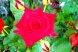 Пансионат, Курортная улица, 4/4 на 6 номеров - Фотография 36