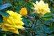 Пансионат, Курортная улица, 4/4 на 6 номеров - Фотография 37