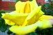 Пансионат, Курортная улица, 4/4 на 6 номеров - Фотография 39