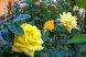 Пансионат, Курортная улица, 4/4 на 6 номеров - Фотография 42