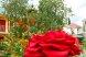 Пансионат, Курортная улица, 4/4 на 6 номеров - Фотография 50