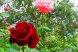 Пансионат, Курортная улица, 4/4 на 6 номеров - Фотография 52