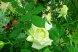 Пансионат, Курортная улица, 4/4 на 6 номеров - Фотография 53