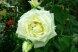 Пансионат, Курортная улица, 4/4 на 6 номеров - Фотография 54
