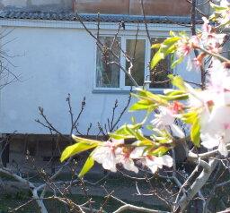 1-комн. квартира, 56 кв.м. на 4 человека, улица Нахимова, поселок Орджоникидзе, Феодосия - Фотография 4