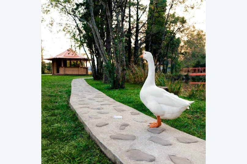 Парк-отель Дивный, Сочинское шоссе, 2Г на 95 номеров - Фотография 11