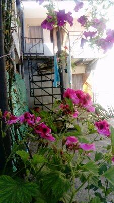 Гостевой дом , Проспект Ардзинба, 108 на 6 номеров - Фотография 1