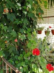 Гостевой дом «Орхидея», Кольцевая улица, 7 на 12 номеров - Фотография 4